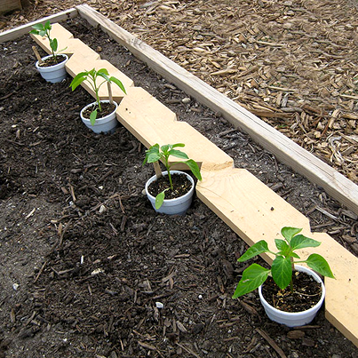 An easy way to space your seedlings