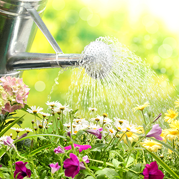 How to save water while gardening