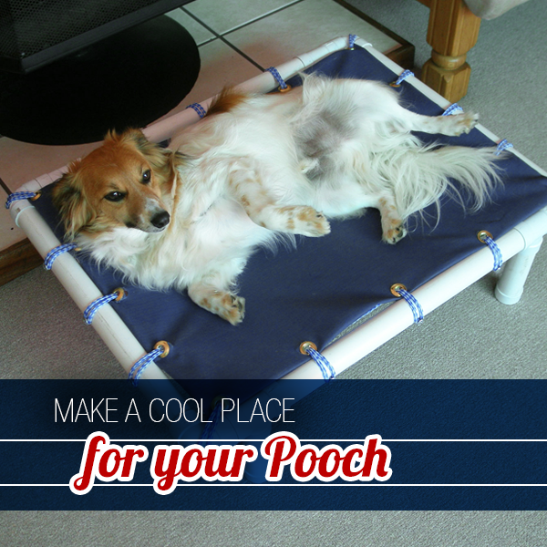 Raised Pet Stretcher Bed