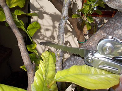 Pruning South African Plants