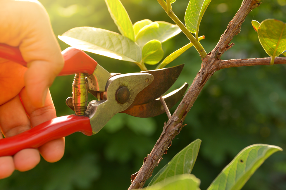 Mica Hardware How To Prune And Trim South African Plants