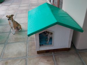 Completed Kennel